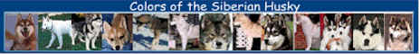 See over 250 different Siberians!