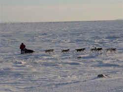 Iditarod 2006 - Possibly Norton Sound