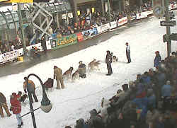 Fur Rondy Camera - Iditarod 2006